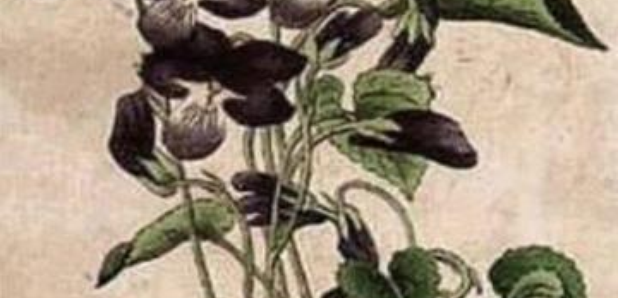 How many faces in the flowers optical illusion